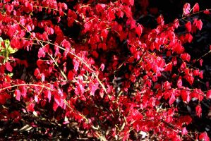 Flowers, Berries And Leaves 27 September 2015 59 F by LUSHMONTANAS