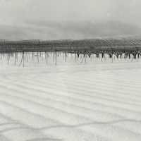 The winter orchards ::: by aopan