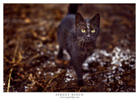 Black Cat. by sergey1984