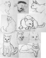 Sketches 02 - cats by leamatte