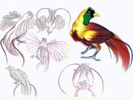 Tropical Bird Studies A by neofeliss