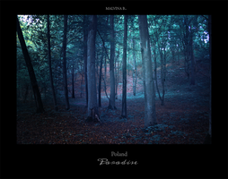 Poland Paradise Allenstein forest IV by paganus