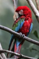 parrot by thevictor2225