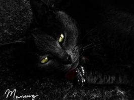 "My model Cat ""Muning"" by carlusdarienus"