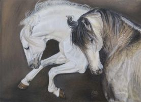 Andalucian and Lusitano by susa58