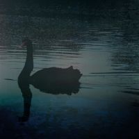 black swan theory by davespertine