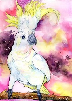 Sulfur-crested Cockatoo by Onyana