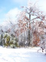 Winter Scape065 by effing-stock