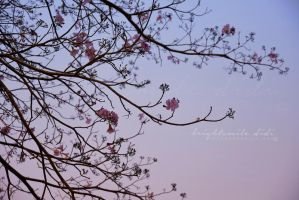 Blooming in the air by Brightsmile-didi