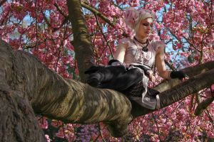 Phoebe in the tree by hoschie