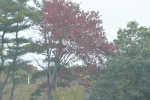 2014 Natural Autumn Color 17 by Miss-Tbones