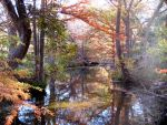 Autumn in Comal County 6391 by canyond