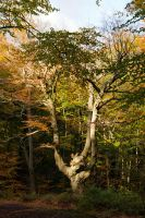 Gnarled and Ancient by parallel-pam