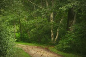 Impressionist Path by ncphotojunkie