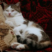 resting like a human by Dr-Eryk-Lim