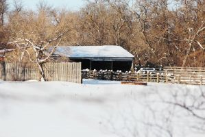 Winter on the Farm by Joe-Lynn-Design
