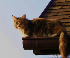 cat on the roof by MamaBakasi