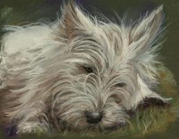 Pastel Westie by BTBArtist