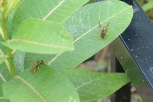 Wasps, Licking the Leaves 2 by Miss-Tbones