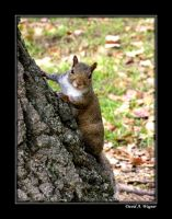Got Nuts? by David-A-Wagner