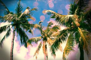 Palm Trees by C-Money