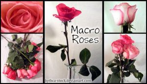 Macro Roses Pack by kythca-stock