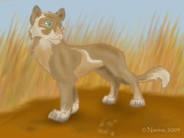 New lioness character by Navina