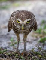Don't mess with an owl! by Blizzard1975
