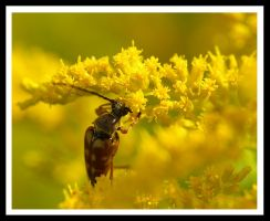 Pollen Diving by jesse-botanical
