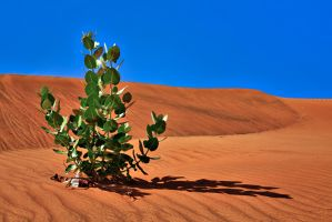 The Desert 1 by Hamrani