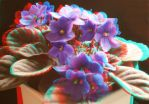Anaglyph 2 African violet by bjman