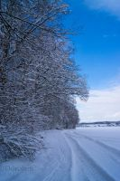 Snow and a suny day by dorolain