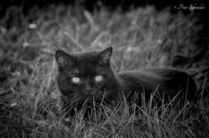 Black cat. by Phototubby