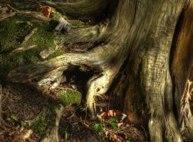 Deeply Rooted by DGJ13