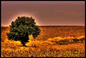 Alone a tree among sunflowers by ahfmm