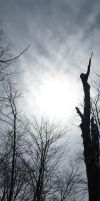 Dead Tree Against the Sky by CiacoAgain