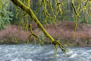 Moss covered tree by CyclicalCore