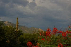Catalinas with Flowers by PatGoltz