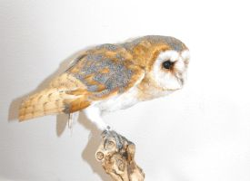 mounted Barn Owl by HippiUnicorn