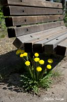 Dandy by the bench by gigi50