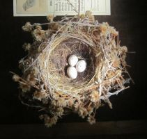Nest stock 1 by chamberstock