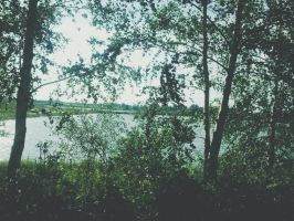 by forests by adriannazajac