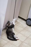 Kitten on a string 5 by Sinned-angel-stock