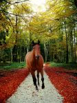Autumns Coming.... by jackjohndreau