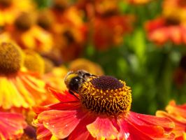 Floral, Bee, focus by KerrieLBrown