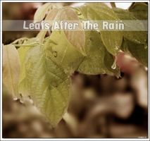 Leafs After The Rain by KeReN-R