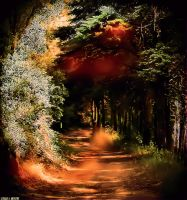 A Magical Road..... by Tigles1Artistry
