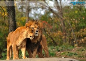 King and Queen 0117 by mgroberts
