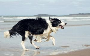 Running Dog by micromeg