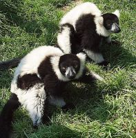 My day with the Lemurs  Part 8 by lenslady